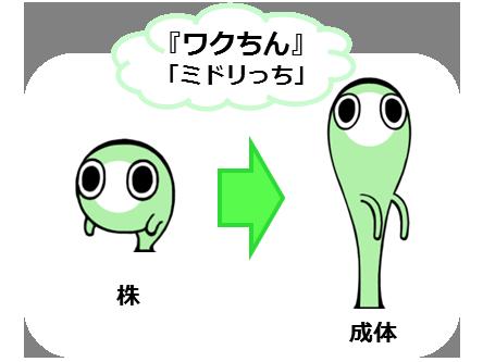 wakuchinzu1