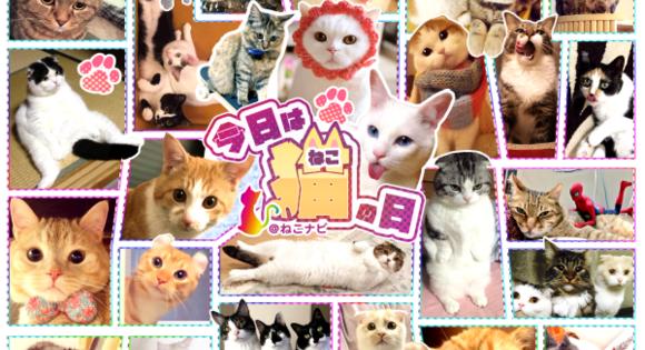 FireShot Capture 16 - 【祝*猫の日】ねこ好き必見!!Twitterで話題の人気猫アカウント50名を一挙大_ - http___nekonavi.jp_archives_20546
