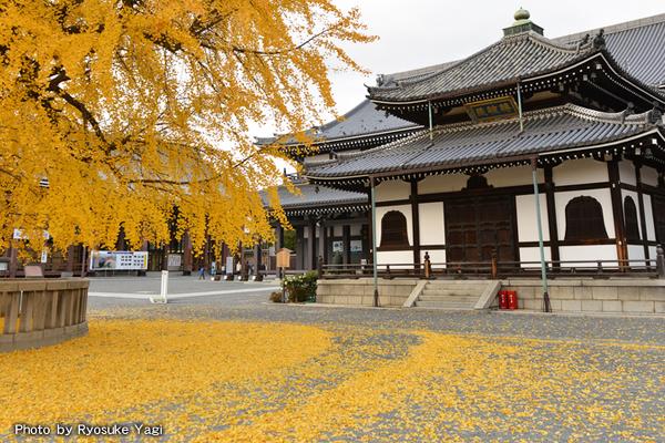 京都市下京区にある西本願寺。