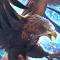 シャドウバース 飛翔する狩鳥のアイコン