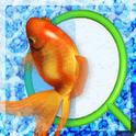 THE 金魚すくい