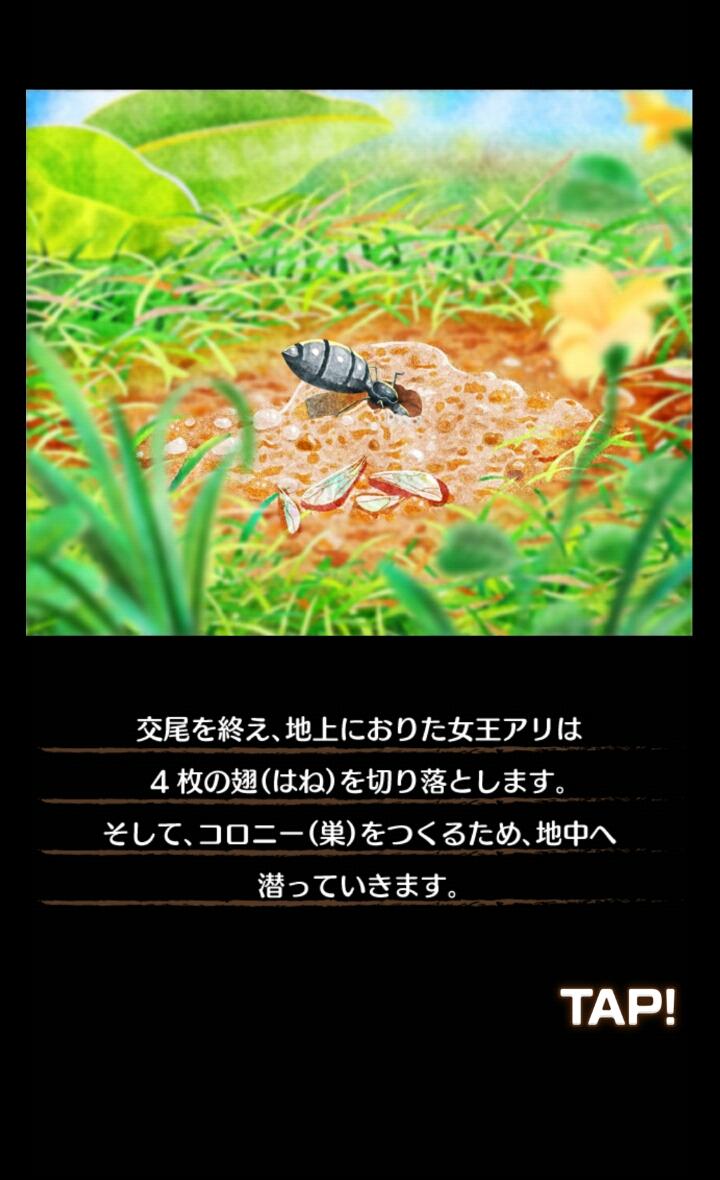 アリの巣コロニー androidアプリスクリーンショット2