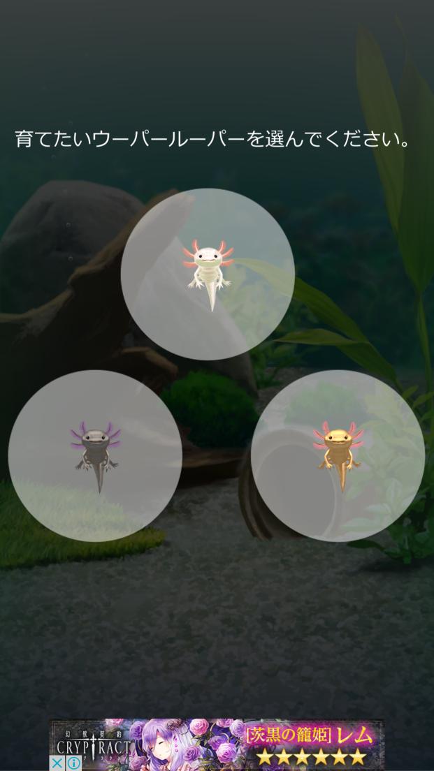 androidアプリ 癒しのウーパールーパー育成ゲーム攻略スクリーンショット2