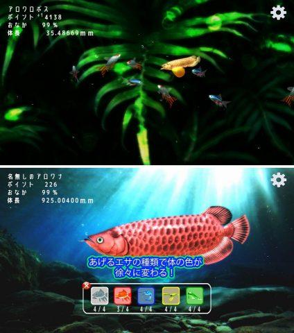 稚魚から育てるアロワナ レビュー
