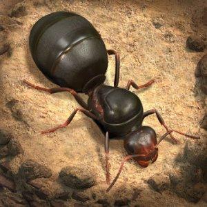ザ・アンツ:アンダーグラウンド キングダム(The Ants: Underground Kingdom)