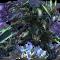 【パズドラ】極限の闘技場3が安定!ラグドラの闘技場3クリアパーティ紹介